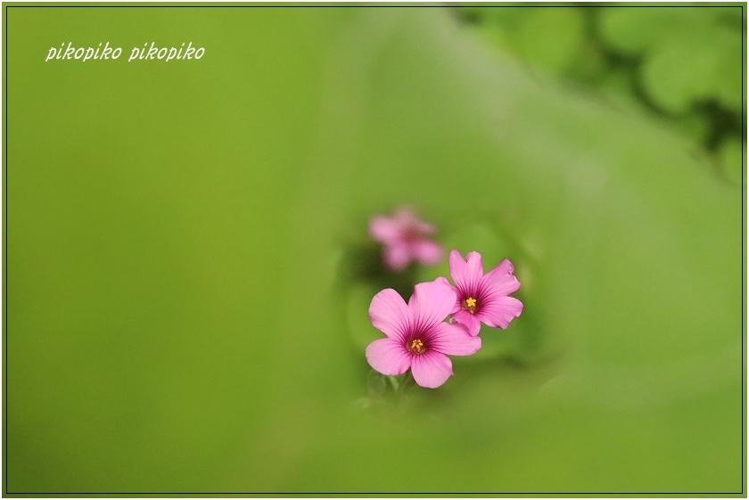 秘密の花園  _e0353681_00080164.jpg