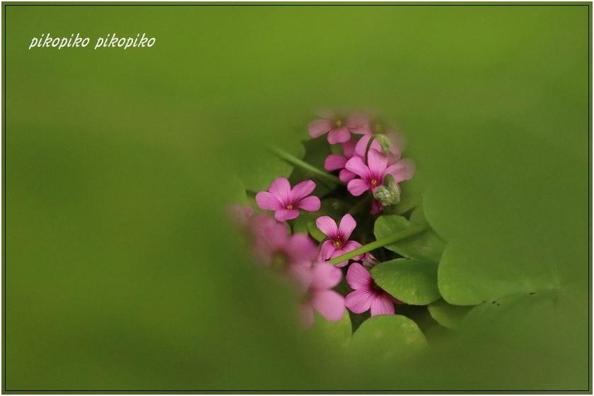 秘密の花園  _e0353681_00080881.jpg