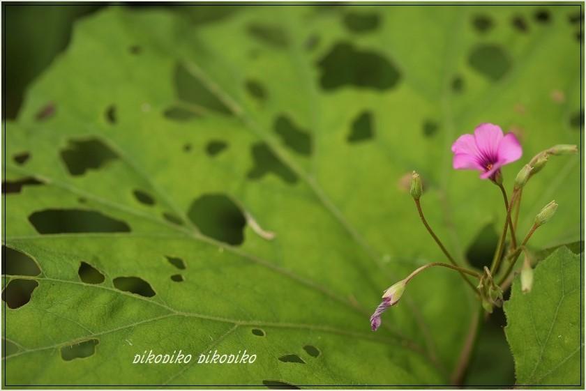 秘密の花園  _e0353681_00190809.jpg