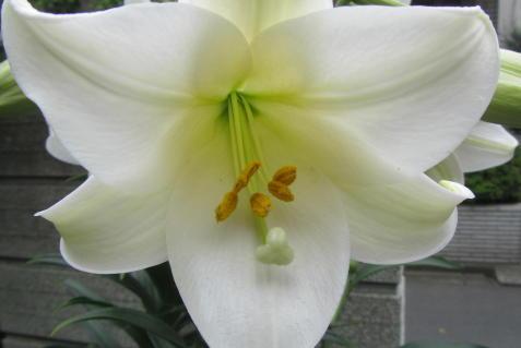小さな庭の花木_c0220597_08542709.jpg