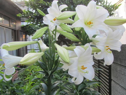 小さな庭の花木_c0220597_08550435.jpg