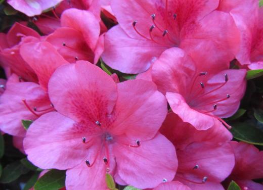 小さな庭の花木_c0220597_08562188.jpg