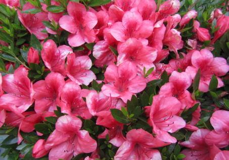 小さな庭の花木_c0220597_08563858.jpg