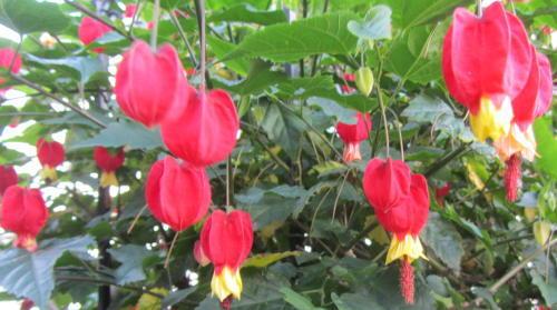 小さな庭の花木_c0220597_08580033.jpg