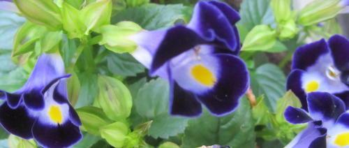 小さな庭の花木_c0220597_08584531.jpg