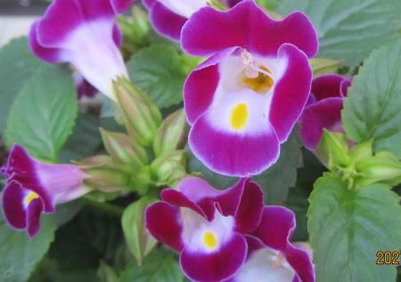 小さな庭の花木_c0220597_08585703.jpg