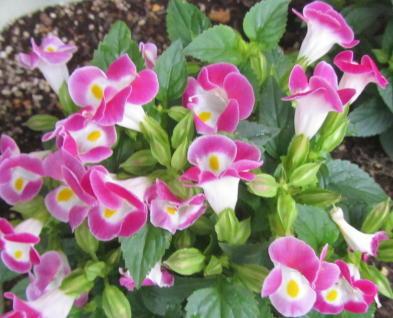 小さな庭の花木_c0220597_08591072.jpg