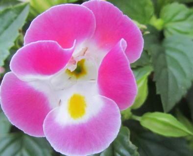 小さな庭の花木_c0220597_08594006.jpg