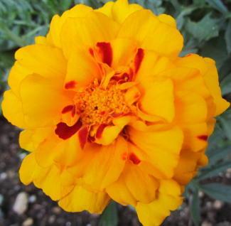 小さな庭の花木_c0220597_09001123.jpg