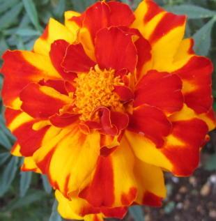 小さな庭の花木_c0220597_09002660.jpg