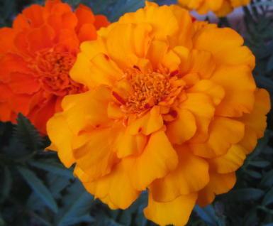 小さな庭の花木_c0220597_09003538.jpg