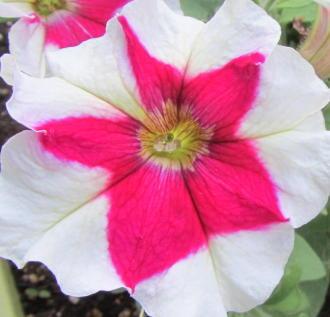 小さな庭の花木_c0220597_09011525.jpg