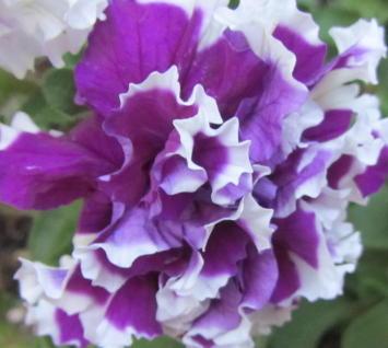 小さな庭の花木_c0220597_09012848.jpg