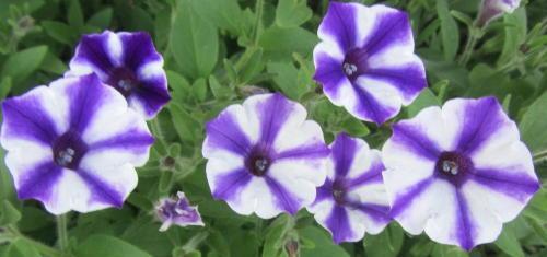 小さな庭の花木_c0220597_09035293.jpg