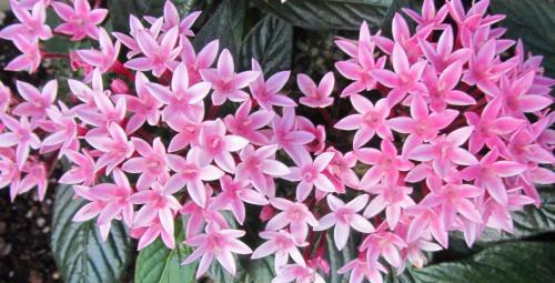 小さな庭の花木_c0220597_09042900.jpg