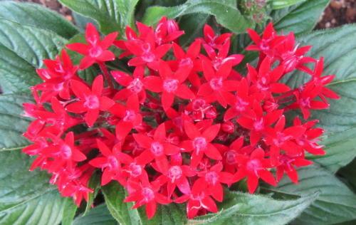 小さな庭の花木_c0220597_09050178.jpg