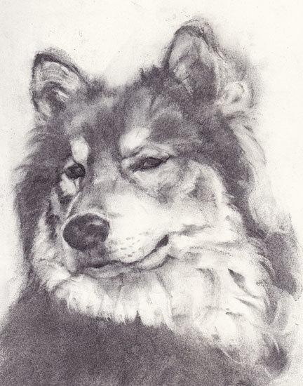 木炭犬3_e0195115_16081884.jpg