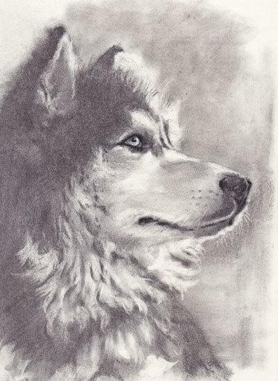木炭犬3_e0195115_16082481.jpg