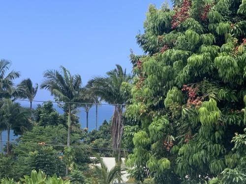 ハワイ島のライチ!!_c0187025_08573212.jpeg