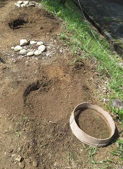 山小屋に「コニファースカイロケット」を植える_d0130640_16562310.jpg