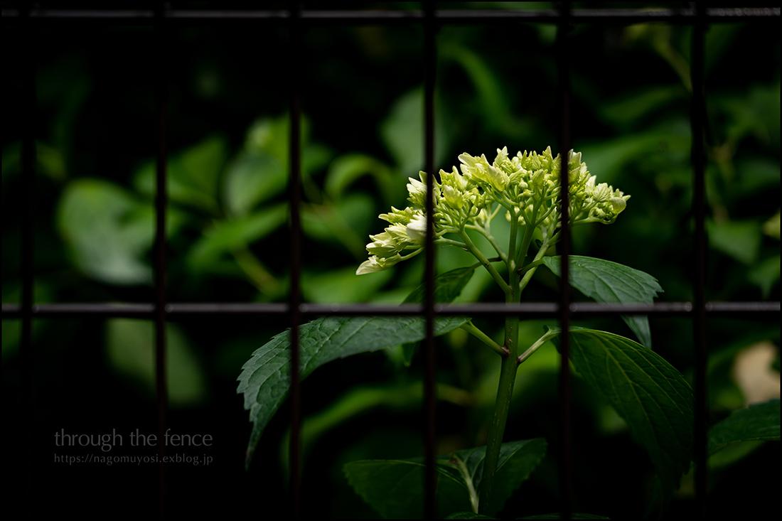 フェンス越しのキミ_c0187744_20414934.jpg