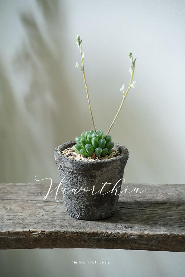 花芽が二本_d0124248_14473851.jpg