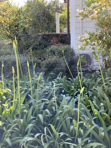 5月の庭の備忘録_f0121167_23371945.jpeg