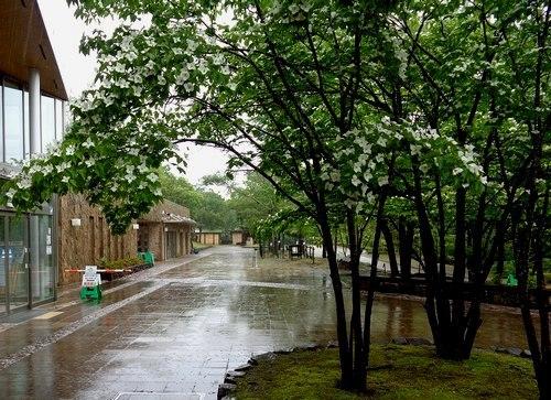雨の日にレイニーブルーを聴いている_b0102572_22403743.jpg