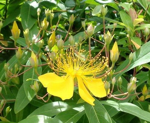 花は花であることに満足しているのだろうか_b0102572_23273844.jpg