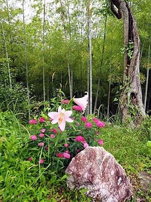 汐見ガーデンのササユリ_f0129726_18273342.jpg