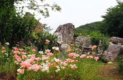 汐見ガーデンのササユリ_f0129726_18584518.jpg