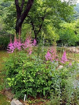 汐見ガーデンのササユリ_f0129726_19031319.jpg
