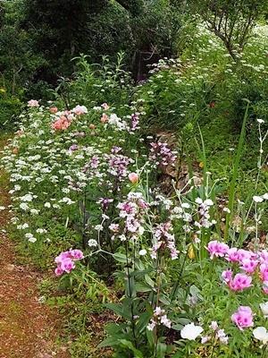 汐見ガーデンのササユリ_f0129726_19062511.jpg