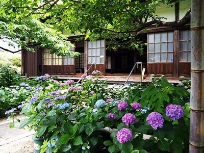 大慈寺の紫陽花_f0129726_21531057.jpg