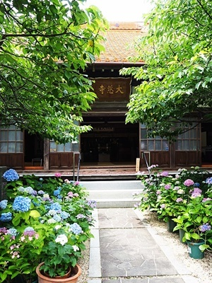 大慈寺の紫陽花_f0129726_21531325.jpg