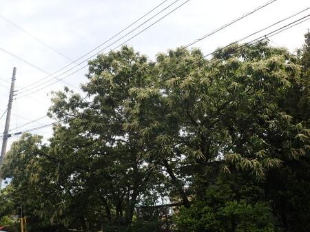2021年5月下旬 埼玉県北部久喜市 拙宅周辺の虫たち_c0353632_07124921.jpg