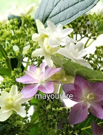 マユールシール♪_d0169179_23505967.jpg