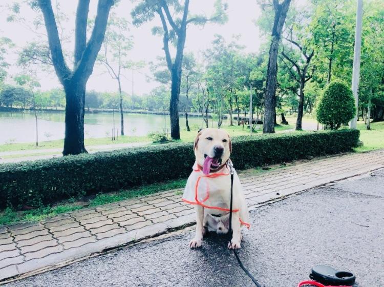 ローシーズンの散歩_f0144385_14310318.jpeg