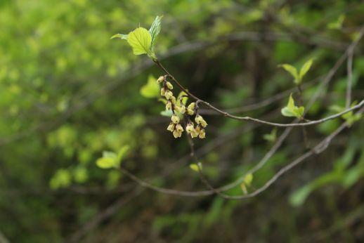 20210523 【奥裾花自然園】植物たち-4_b0013099_21282242.jpg