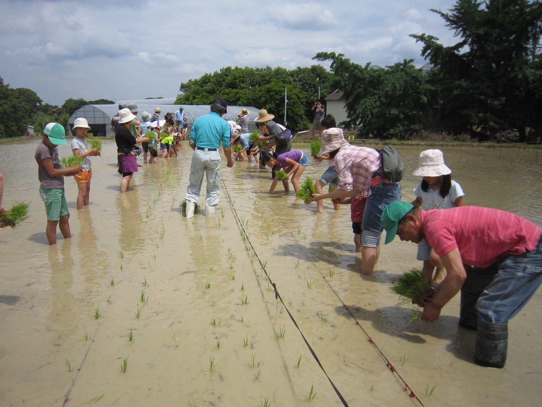 米づくり体験「田植え」中止のご案内_d0120421_12320511.jpg