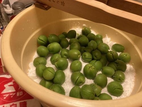 玉ねぎ収穫!_c0331145_21362204.jpg