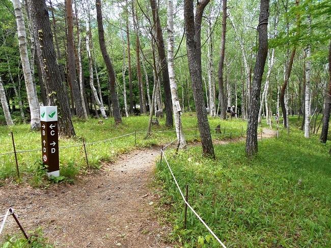 芦川のスズラン群生地に行ってきました。_d0153860_08424909.jpg