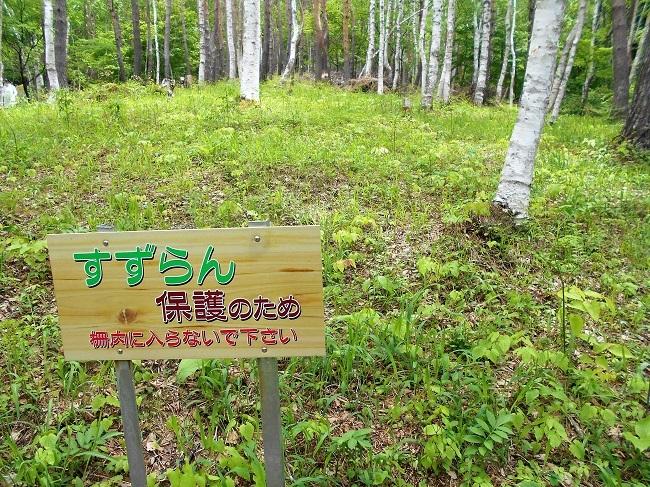 芦川のスズラン群生地に行ってきました。_d0153860_08430217.jpg