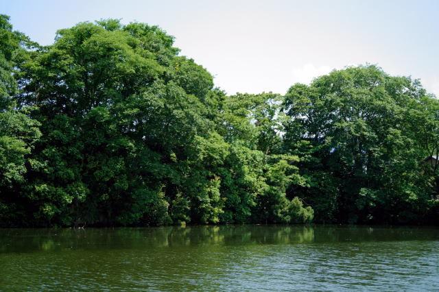 池はにぎやか!_a0268377_19551669.jpg
