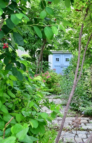 5月の庭の薔薇 2021_d0025294_18401846.jpg