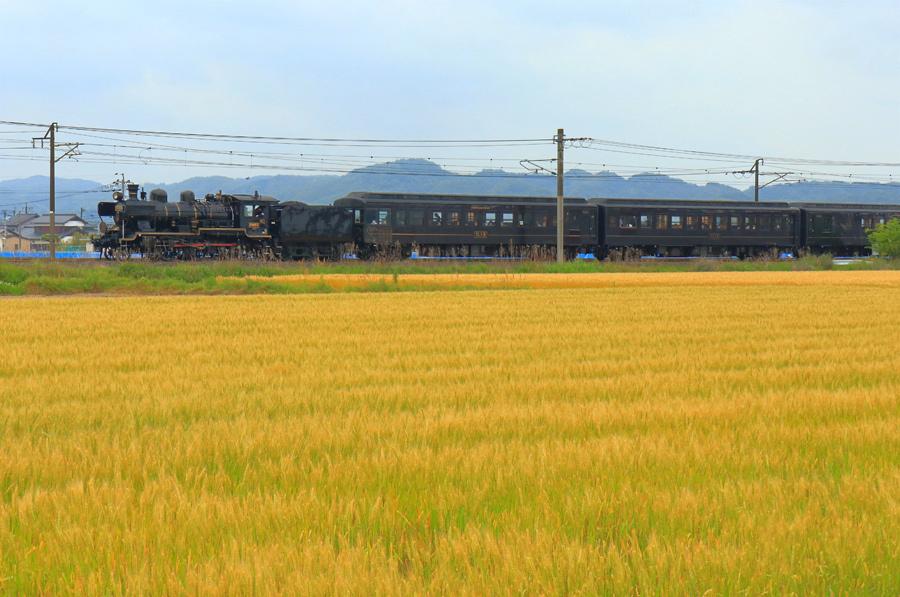 麦畑を行くSL人吉_e0093903_09590182.jpg