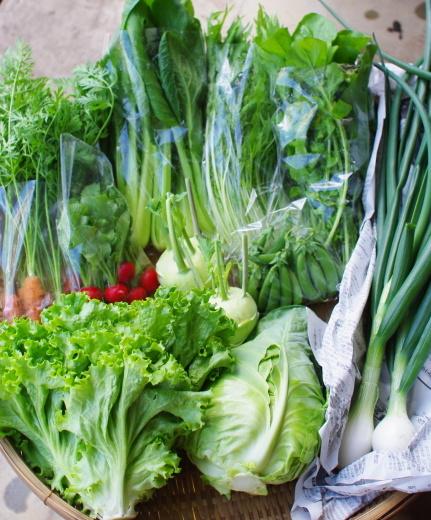 今週の野菜セット(6/1~6/5着)_c0110869_12024610.jpg