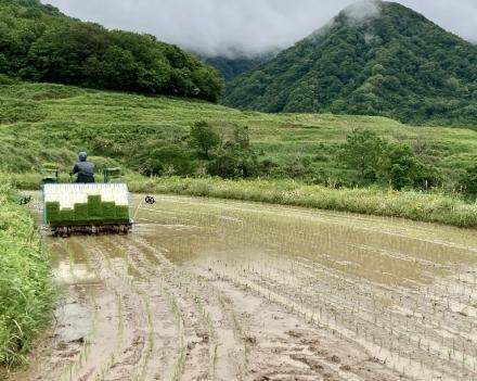 田植え終わり、あぜ草を刈っています_d0178386_20325679.jpg