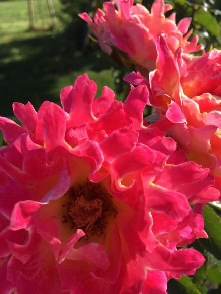 「ROSE ROSE」のご感想♡_f0399901_10042069.jpg