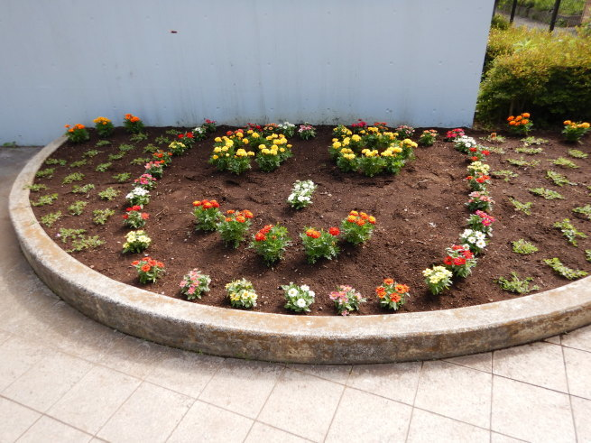 花壇の模様替え 2_c0401306_16024720.jpg